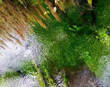 Water Portrait: Taft Creek, Hoh Rainforest | Olympic National Park