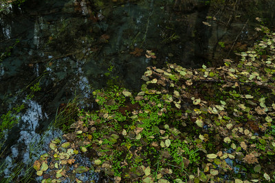 Water Portrait: Taft Creek, Hoh Rainforest | Olympic National Park