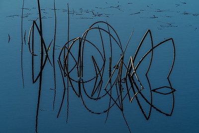 Water Portrait: Reeds on Conboy Lake | Conboy Lake National Wildlife Refuge