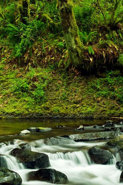 Stream below Bridal Veil Falls, Columbia River Gorge, Oregon