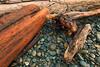 Driftwood at Ruby Beach, Washington
