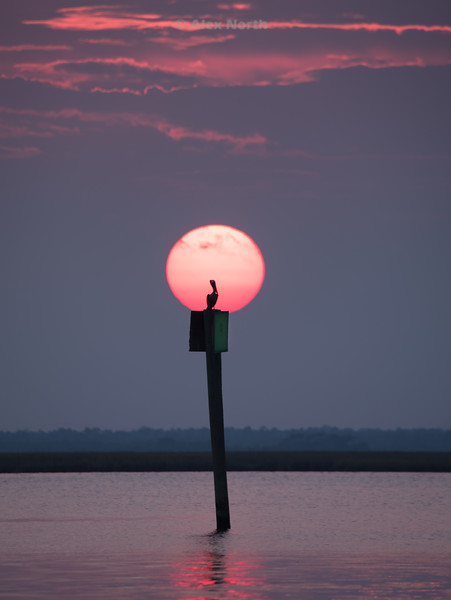 Birds-Pelican LampPost