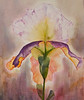 "Iris<br /> image 12"" x 10""<br /> #1245 SOLD"