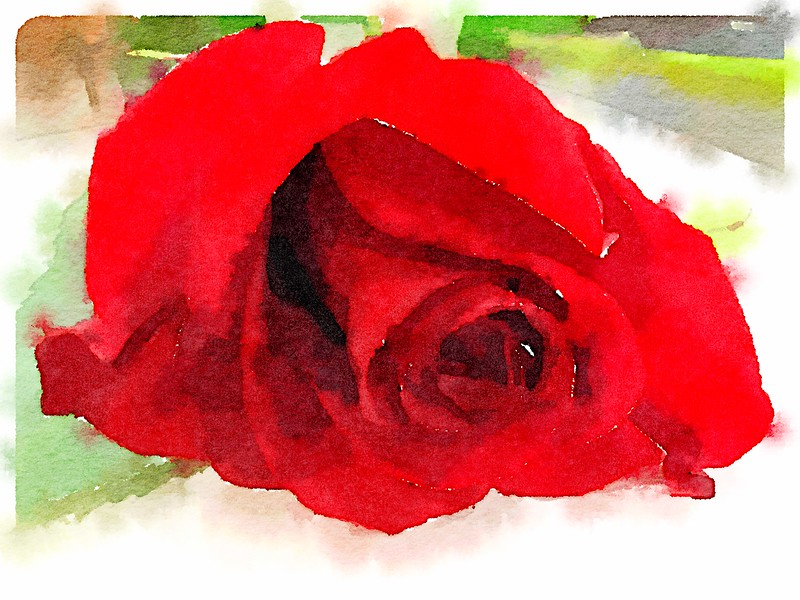 Watercolored Rose Red