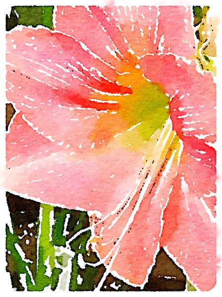 Watercolored Amaryllis