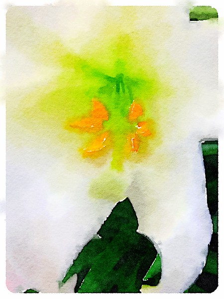 Watercolored White Lily