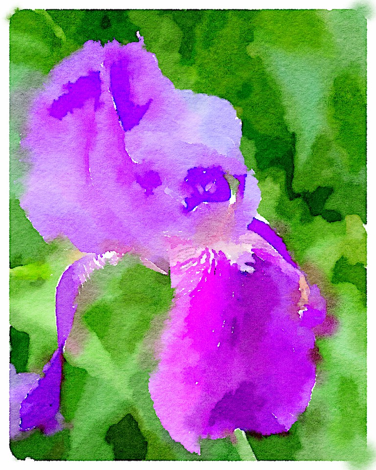 Watercolored purple Iris