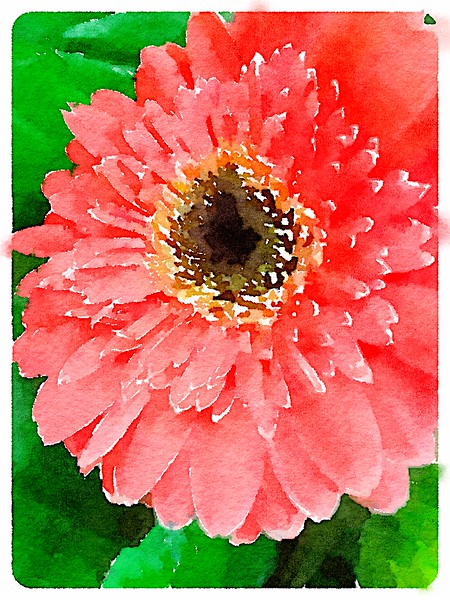 Watercolored Orange Gerbera