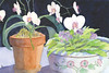 Orchids and African Violets