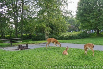 Hey I reserved this site Bambi!  That's OK I went ahead and moved to another spot! :) LOL