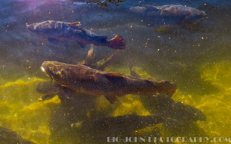 Walhalla Fish Hatchery