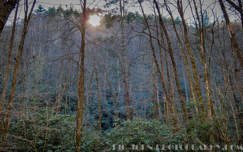 East Fork Chattooga River trail