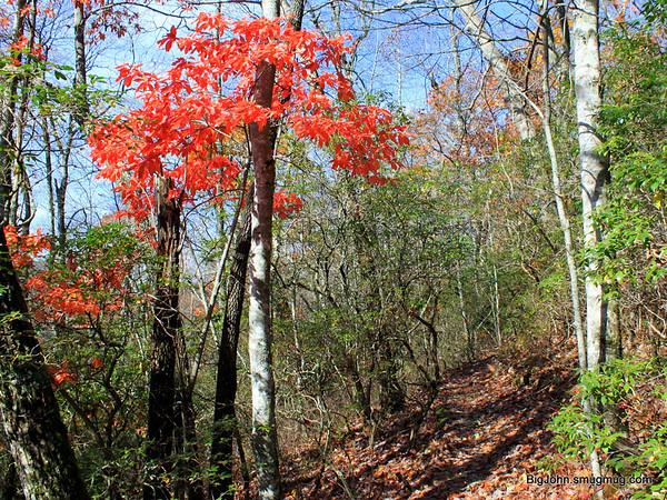 Color on the trail