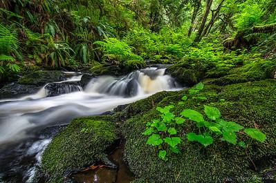 Ludlow Creek