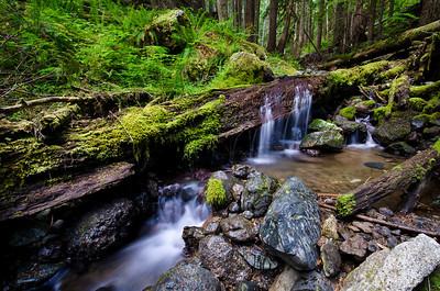 Lush Stream