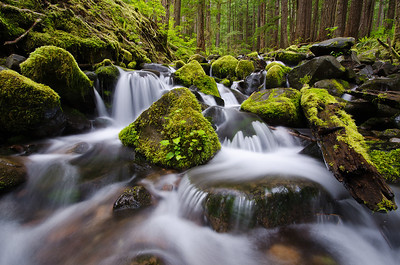 Sol Duc River Trail