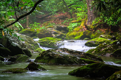 Flowing River in the Forest