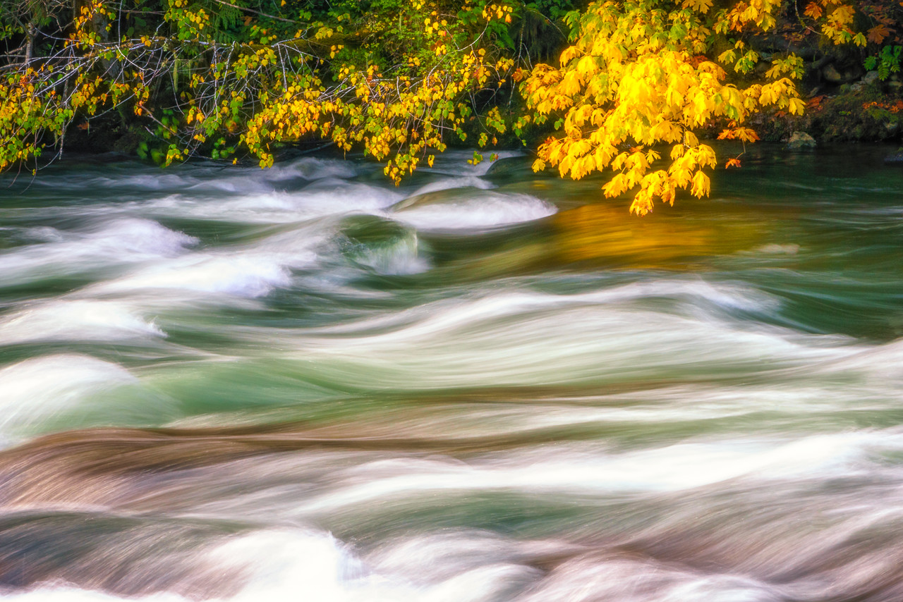 Autumn Gold Over the Stamp River