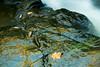 Colorful Rocks along Bond Falls