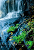Bright Pine Needles against Black Rocks in Bond Falls