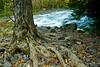Spooky Looking Tree beside Upper Bond Falls