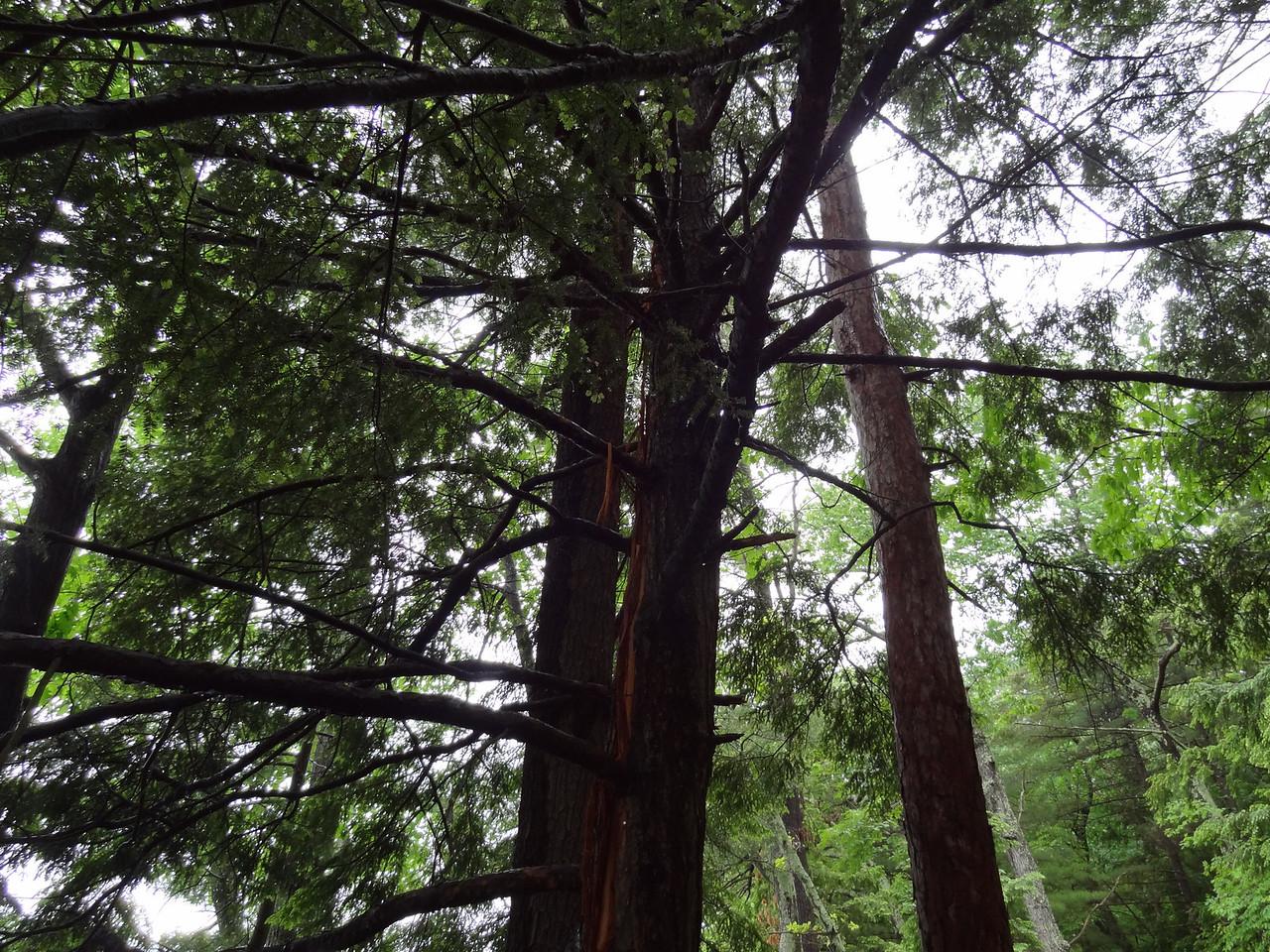 Same Tree up higher.