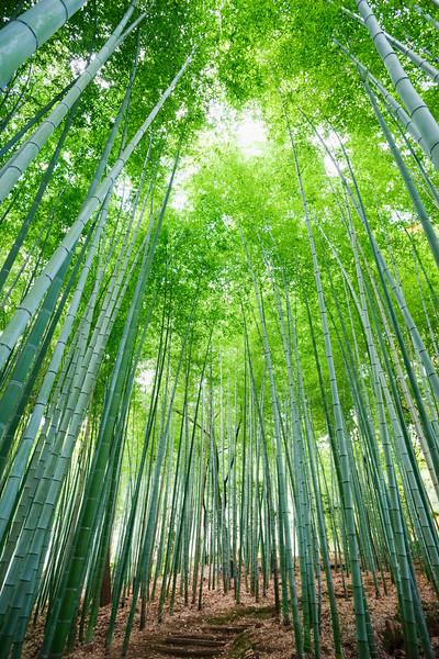 Japan,Kyoto