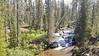 YellowstoneCascadeCreek