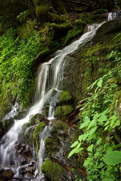 Cliff Branch Falls