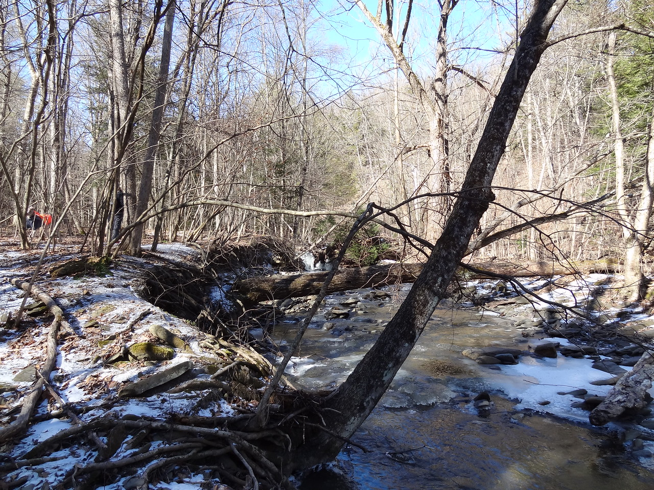 Off the Coplon Road trailhead, we made our way down to the creek. We were a little nervous choosing a crossing as it was 15°F but the water was rushing and the ice was not solid. We were contemplating crossing on the log when Capitano Stupido raced across the ice above the deepest hole and stopped when the ice started to crack. I yelled for him to move, but I was too late. He went right through the ice with only his head showing above water. His neoprene jacket actually kept him somewhat dry but he was shivering none-the less. As such, we went back to the car and drove around a little while he dried off and warmed up. Then we went to the Main entrance on Rt 159 and tried again.