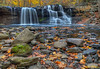 Brush Creek in Autumn 5463 w46