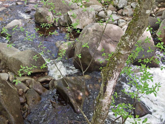 A climb to the top of Trap Falls at Willard Brook