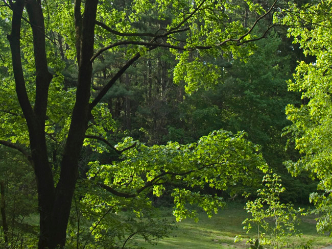 Tree in the late afternoon sunlight at Willard Brook