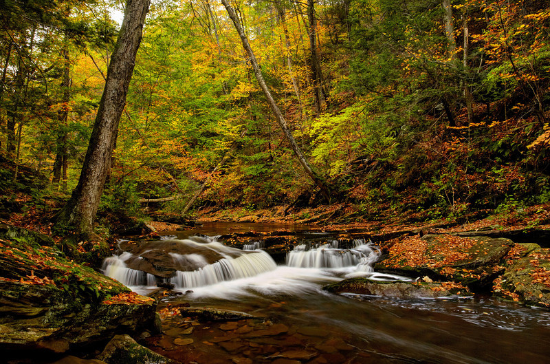 Autumn in Ricketts Glen