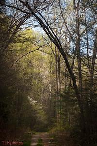Mountain trail to Tom Springs Falls