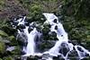 Below the Falls - Starvation Creek, Columbia River Gorge, Oregon