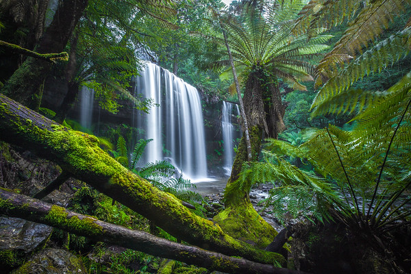 Russell Falls Ferns