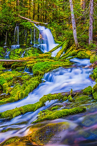"""Forest Glen,"" Big Spring Creek Falls, Gifford Pinchot National Forest, Washington"