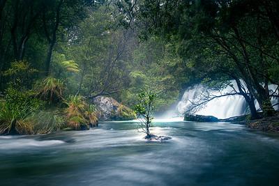 Tarawera Cascades Tree