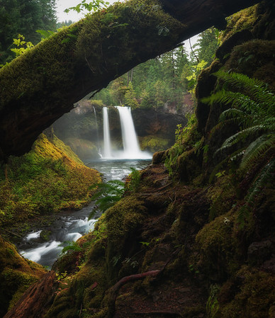 Koosah Falls in the Willamette National Forest, Oregon.