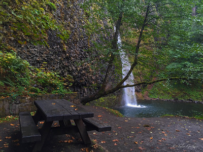 Picnic by the Horsetail