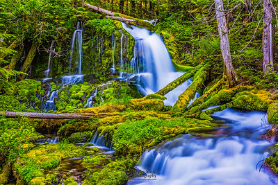 """Falling Through the Forest,"" Big Spring Creek Falls, Gifford Pinchot National Forest, Washington"