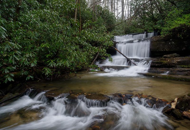Winter Green at Crow Creek