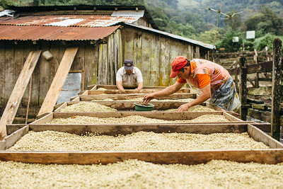 Coffee is closely connected to water. Water For People is partnering with coffee plantations and local microfinance institutions to provide different types of sanitation loans for families who work at the plantations. In 2016, more than 400 sanitation loans were disbursed to families in northern Nicaragua through this program.