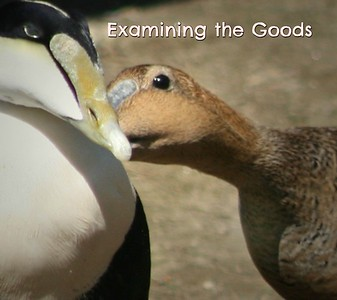 WHAT DO EIDERS HAVE TO SAY ABOUT IT?