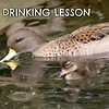 Drinking Lesson