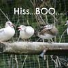 Hiss_Boo_luwi