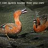 i can qk louder_then_u