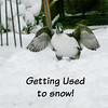 GettingUsed2Snow