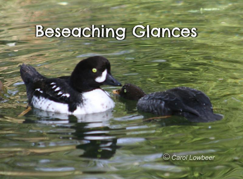 Beseaching GlancesCr-2